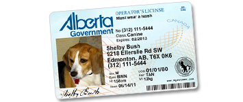 Dog Tag Drivers License Ontario
