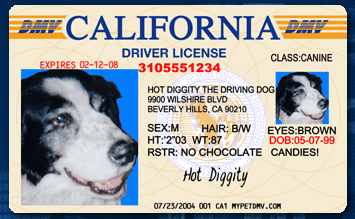 a personal view on dog licences