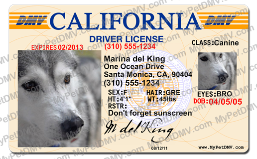California License Id California Pet Pet